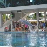 The dolphin through the hoop.